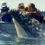 mexico_whale_watching